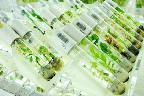 جزوه اثرات بیولوژیکی،دارویی و فیتوشیمی گیاهان دارویی